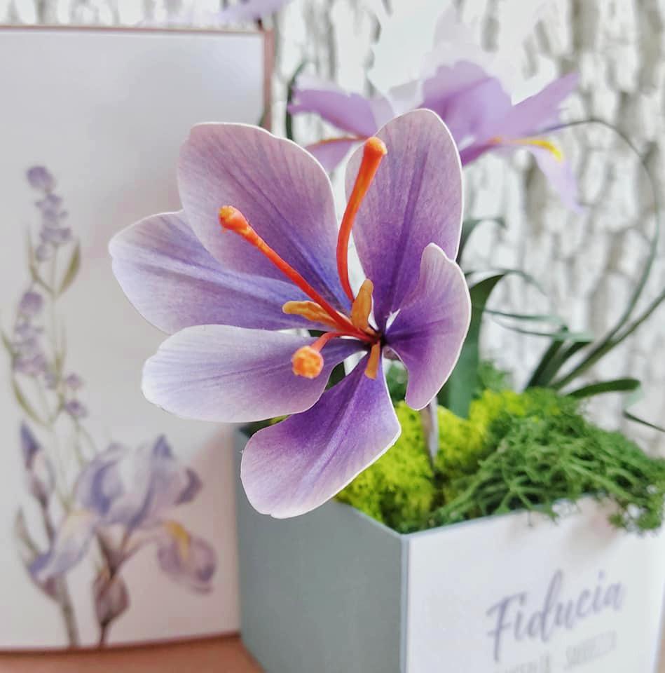 Il fiore dello zafferano 💜 il fiore della mia infanzia